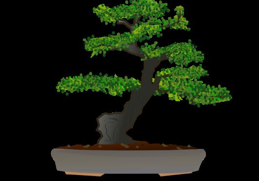 Brilliant bonsais with South Marston Gardening Club